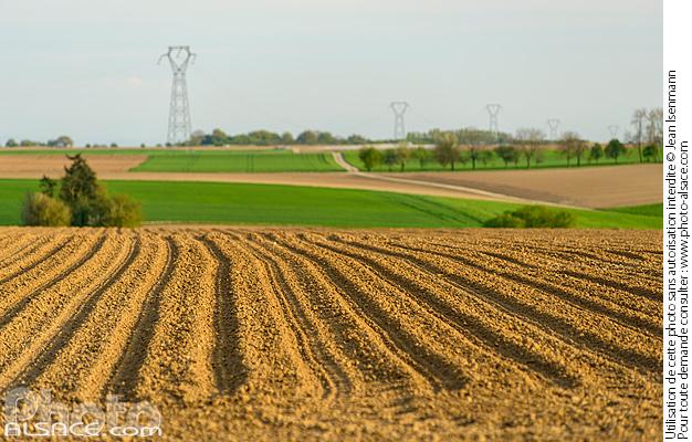 Photo paysage agricole pfulgriesheim bas rhin 67 - Comptoir agricole bas rhin ...