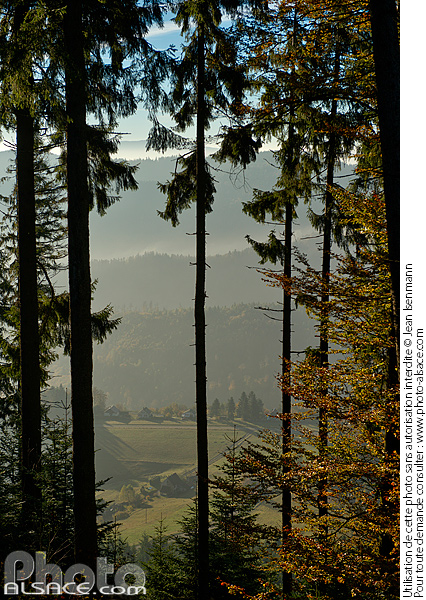 Photo : View through a spruce forest from the slopes of Climont
