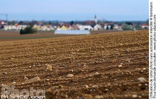 Photo champ labour oberschaeffolsheim bas rhin 67 - Comptoir agricole bas rhin ...