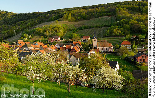 Photo : Village de Reichsfeld au printemps, Bas-Rhin (67) - (ref. n55450) © Jean Isenmann