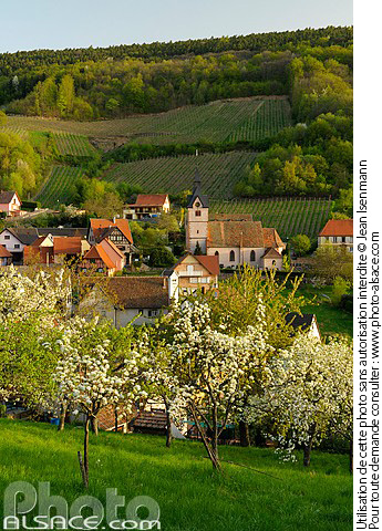 Photo : Village de Reichsfeld au printemps, Bas-Rhin (67) - (ref. n55452) © Jean Isenmann