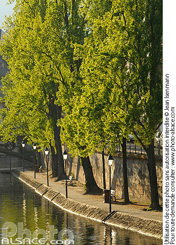Photo : Quai Saint-Thomas au printemps, Strasbourg, Bas-Rhin (67) - (ref. n55540) © Jean Isenmann