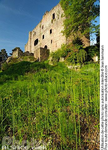 Ch�teau du Birkenfels, Ottrott, Bas-Rhin (67)
