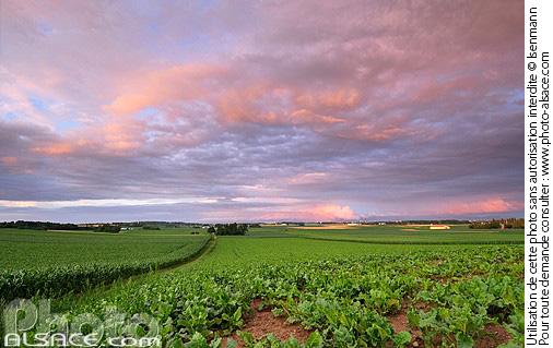 Photo paysage agricole oberschaeffolsheim bas rhin 67 - Comptoir agricole bas rhin ...