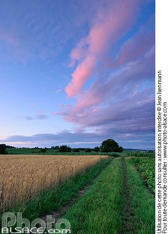 Photo paysage agricole et ciel d 39 t oberschaeffolsheim - Comptoir agricole bas rhin ...