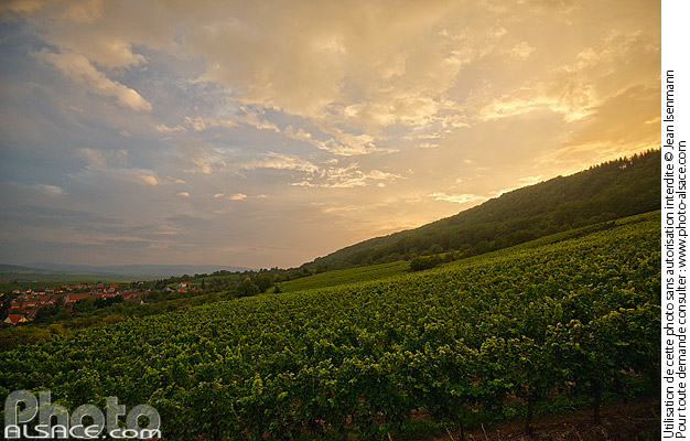 Photo : Vignoble de Wangen, Bas-Rhin (67) - (ref. 140905-001) © Jean Isenmann