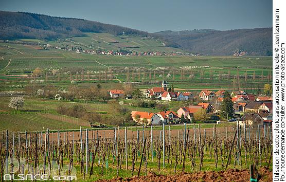 Photo vignoble steinacker au printemps et village de - Comptoir agricole bas rhin ...