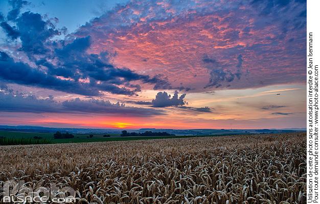 Photo paysage agricole du kochersberg l 39 aube - Comptoir agricole bas rhin ...