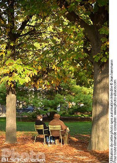 Photo jardin du luxembourg en automne paris 75 n66689 for Arbres jardin du luxembourg