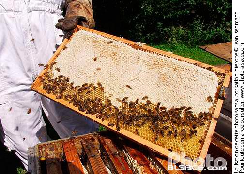 apiculteur 67