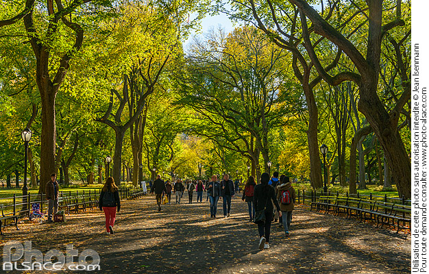 Photo : The Mall and Literary Walk au début de l'automne, Central Park, Manhattan, New York, Etats-Unis - (ref. 171030-077) © Jean Isenmann