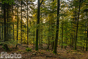 Photo : Forêt domaniale de Dabo, Moselle (57)