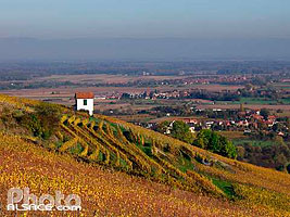 Photo : Vignoble du Kirchberg en automne, Barr, Bas-Rhin (67), Alsace, France