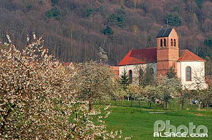 Photo : Champs et l'église Saint-Quirin, Haegen, Bas-Rhin (67), Alsace, France