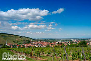 Photo : Vignoble et ville de Barr, Bas-Rhin (67)
