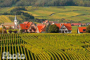 Photo : Vignoble et village de Nothalten, Bas-Rhin (67), Alsace, France