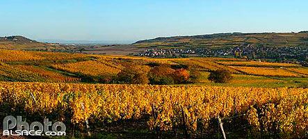 Photo : Vignoble de Bergbieten, Bas-Rhin (67)