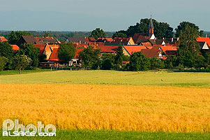 Photo : Champs et village de Schwabwiller, Commune de Betschdorf, Bas-Rhin (67), Alsace, France
