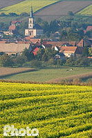 Photo : Champs de colza, village et eglise de Morschwiller, Bas-Rhin (67), Alsace, France