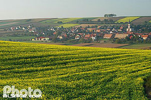 Photo : Champs de colza, village et eglise de Morschwiller, Bas-Rhin (67)