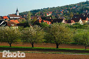 Photo : Verger et village de Bischoffsheim, Bas-Rhin (67)