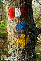 Photo : Balisage du Club Vosgiens sur un arbre, Mollkirch, Bas-Rhin (67)