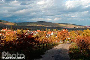 Photo : Chemin viticole et village de Traenheim, Bas-Rhin (67)