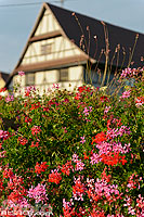 Photo : Geranium et colombages, Zoebersdorf, Pays de Hanau, Bas-Rhin (67), Alsace, France