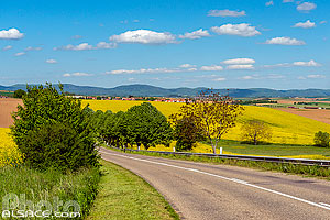 Photo : Route D41, Neugartheim-Ittlenheim, Kochersberg, Bas-Rhin (67)
