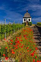 Chapelle du Marlenberg (Chapelle de la Vierge-Douloureuse), Marlenheim, Bas-Rhin (67), Alsace, France