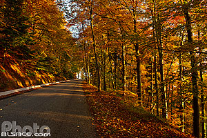 Photo : Route D109 en direction du Mont Sainte-Odile en automne, Saint-Nabor, Bas-Rhin (67)