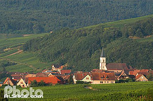 Photo : Village de Nothalten, Route des Vins d'Alsace, Bas-Rhin (67), Alsace, France