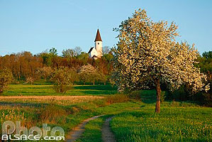 Photo : Chapelle du Kirchberg, Berg, Alsace Bossue, Bas-Rhin (67)