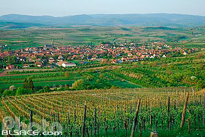 Photo : Village et vignoble de Westhoffen, Bas-Rhin (67), Alsace, France