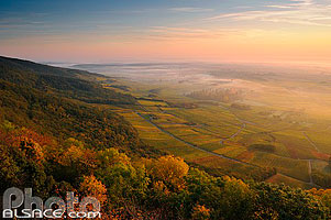 Photo : Forêt et vignoble de Scherwiller au lever du soleil, Scherwiller, Bas-Rhin (67), Alsace, France