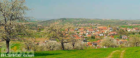Photo : Verger au printemps et village, Fuchsberg, Cosswiller, Bas-Rhin (67), Alsace, France