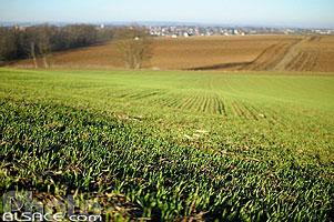 2 photos de griesheim sur souffel p photo - Comptoir agricole bas rhin ...