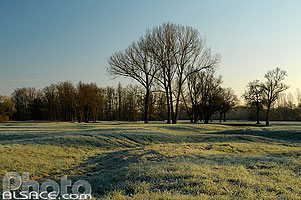 Photo : Prairie (Lieu-dit Urloose), Ebersmunster,  Grand Ried, Bas-Rhin (67)