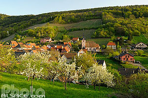 Photo : Village de Reichsfeld au printemps, Bas-Rhin (67), Alsace, France