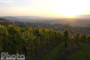 Photo : Vignoble de la Couronne d'Or, Scharrachbergheim-Irmstett, Bas-Rhin (67)