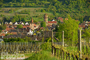 Photo : Vignoble et village de Rosheim, Bas-Rhin (67), Alsace, France
