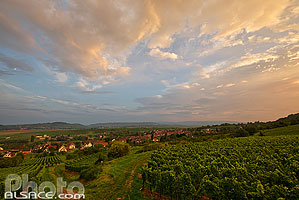 Photo : Le Vignoble de Wangen au crépuscule, Bas-Rhin (67), Alsace, France