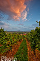Photo : Vignoble de Wangen, Bas-Rhin (67), Alsace, France
