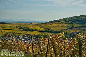 Photo : Vignoble du Moenchberg, Andlau, Bas-Rhin (67)