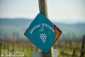 Photo : Sentier viticole, Vignoble Steinacker, Traenheim, Bas-Rhin (67)