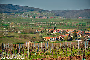 Photo : Vignoble Steinacker au printemps et village de Traenheim, Bas-Rhin (67)