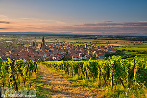 Photo : Vignoble Grand cru Frankstein et Dambach-la-Ville, Bas-Rhin (67)