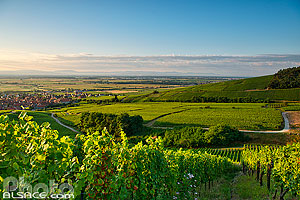 Photo : Vignoble Grand cru Frankstein, Dambach-la-Ville, Bas-Rhin (67)