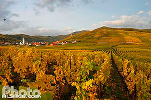 Photo : Vignoble et village de Katzenthal, Haut-Rhin (68), Alsace, France