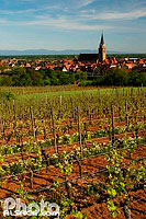 Photo : Vigne et village de Bergheim, Haut-Rhin (68), Alsace, France